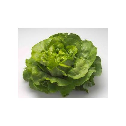 Seminte profesionale - Salata de capatana - Nadine