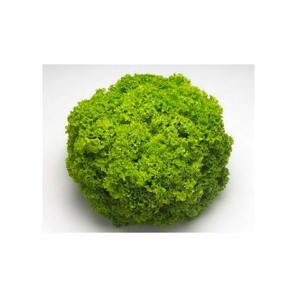 Seminte profesionale - Salata tip lollo - Locarno